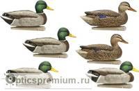 Комплект Avian-X полноразмерных кормящихся чучел кряквы - Topflight Open Water Mallards